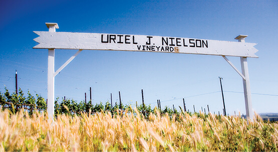 Nielson Estate: Santa Barbara's first commercial vineyard.