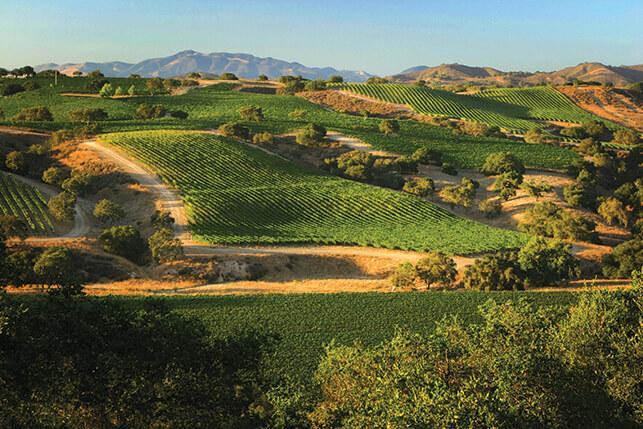 Santa Barbara's wine region is home to six distinct sub-regions.